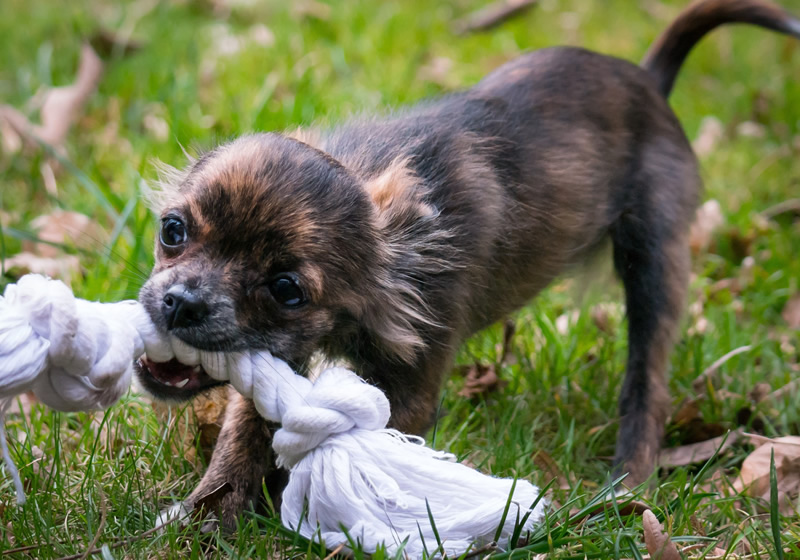 Dog Bites / Dog Attack Personal Injury Lawyer